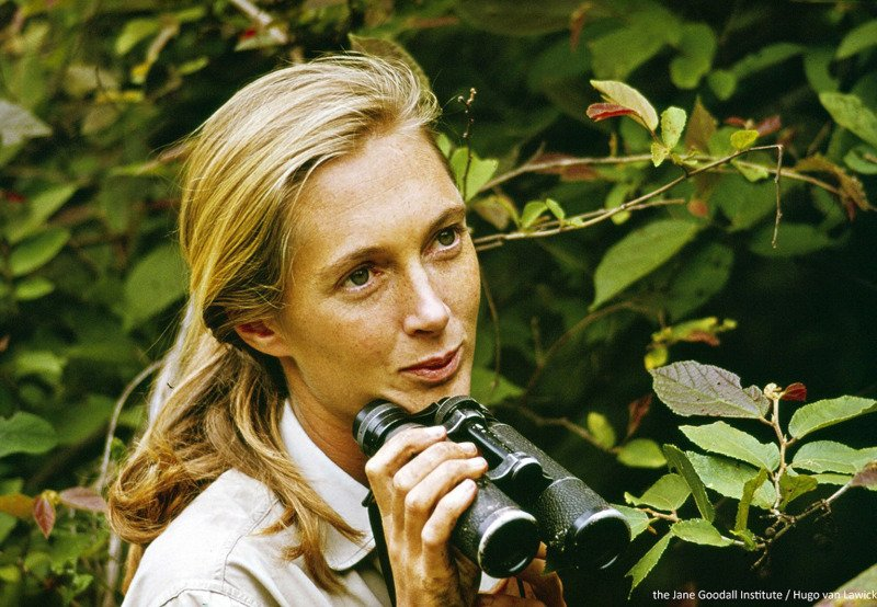Copyright the Jane Goodall Institute by Hugo Van Lawick